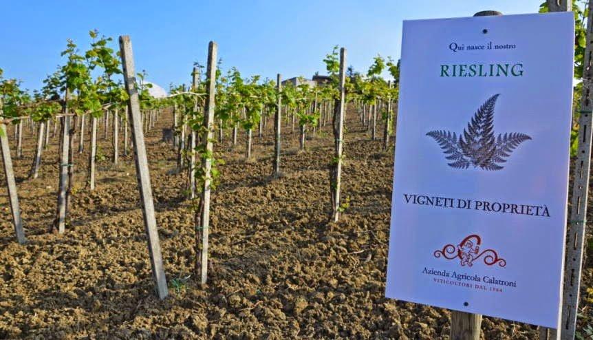 evento_calatroni_lorenzo_vinci_vigneti