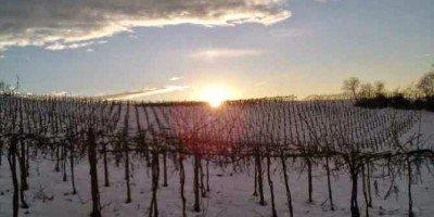 Vigneti innevati Calatroni vini