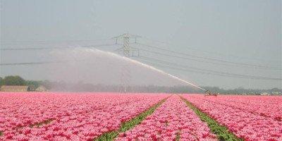 Campo di tulipani. Credits: foto courtesy by Tulipani Italiani (FB)