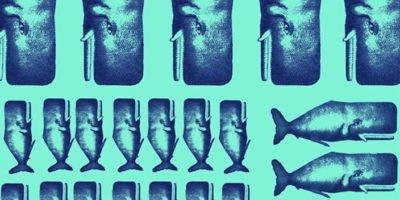 Dal 5 giugno al Teatro Litta di Milano il nuovo progetto di Corrado d'Elia: Io, Moby Dick