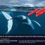Dal 6 ottobre a Milano la mostra Wildlife Photographer of The Year