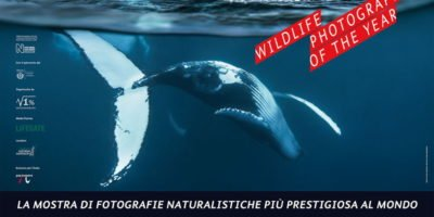 Dal 6 ottobre a Milano la mostra Wildlife Photographer of The Year