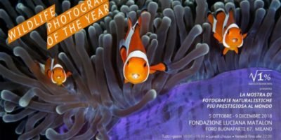 Dal 5 ottobre a Milano torna il Wildlife Photographer of the Year