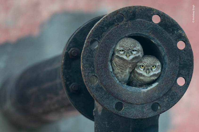cosa fare a Milano sabato 12 ottobre: mostra Wildlife Photographer of the Year