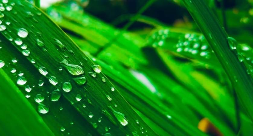 cosa fare fino domenica 29 settembre: Green week