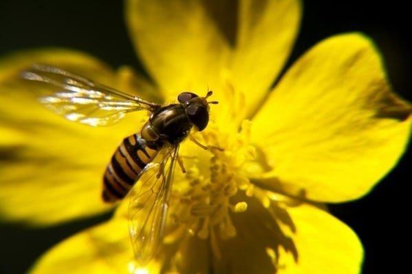 Weekend: cosa fare a Milano fino a domenica 15 settembre: festival della biodiversità