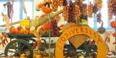 La Casa delle Zucche: ventinovesima edizione di Tutto Zucche, mostra mercato ad Andezeno