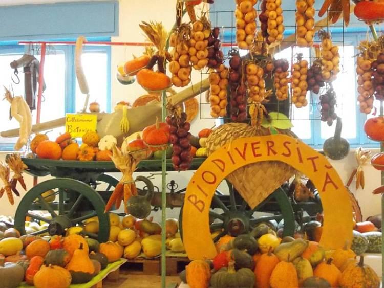 cosa fare domenica 11 ottobre: 28° edizione di Tutto Zucche