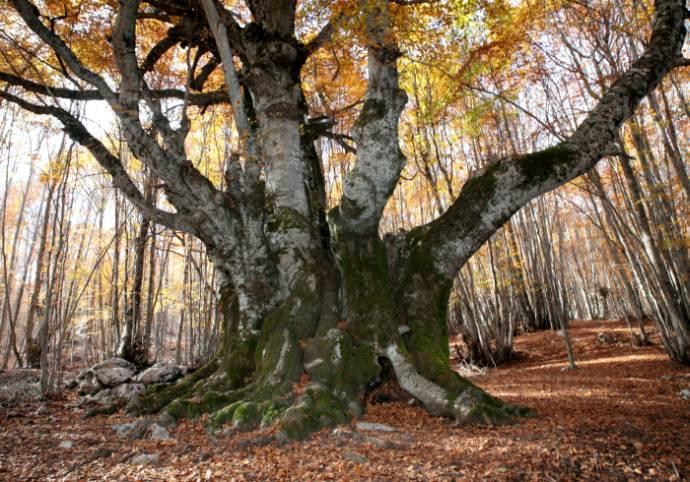 Mostra Patriarchi della natura – Alberi straordinari d'Italia a Milano
