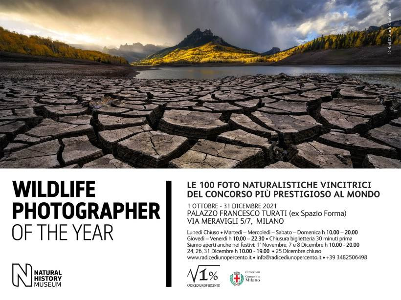 A Milano la mostra WILDLIFE Photographer of The Year